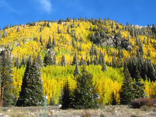 Fall in Colorado - Happy 100 Posts!!