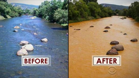 before+and+after+animas