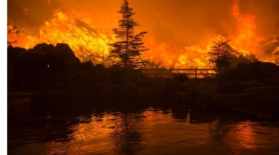 CNN photo forest fire CA